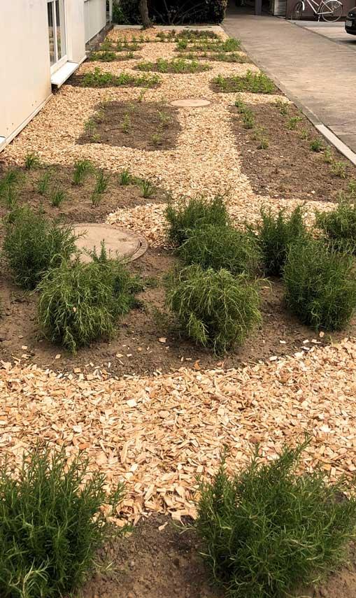 Grünanlage Neuanlage Firma Thut Landschaftsgärtner
