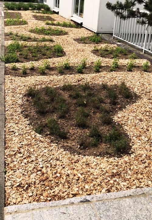 Thut Neuanlage Bepflanzung